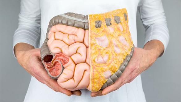 Como anda seu intestino?