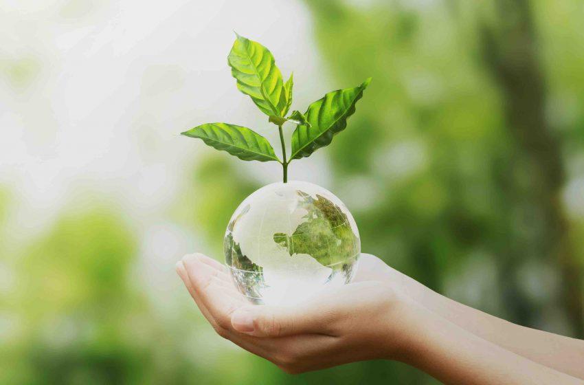As 5 dicas para iniciar a jornada para uma vida mais sustentável